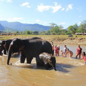 elefantes Tailandia respeto